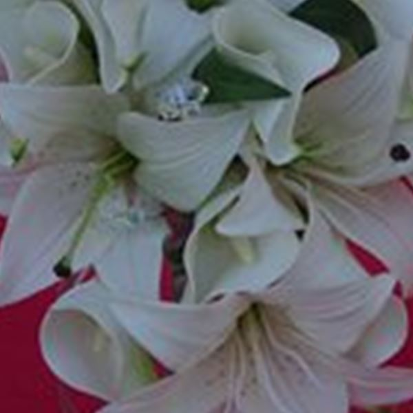 Wedding Flowers-Silky Blooms