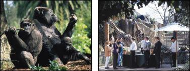 zoos victoria functions wedding venues elliot avenue